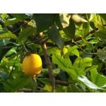 Настойка из цитрусовых: рецепты